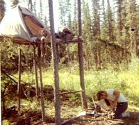 My home in the trees to avoid the bears